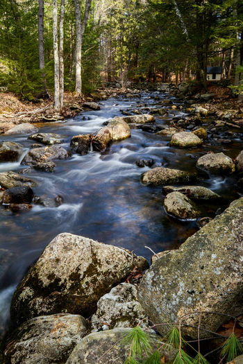 River stream flowing through rocks in forest