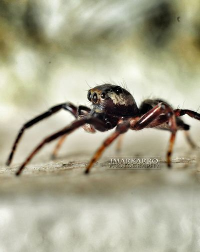 Incy Wincy Spider... Spider Eyeem Philippines Eye4photography