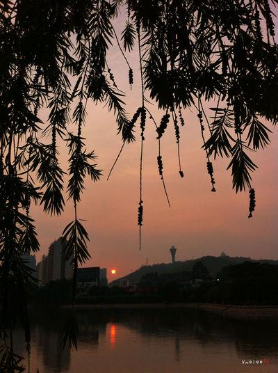 Xiamen Taking Photos Iphonephotography Streetphotography IPhoneography Sunset IPhone Lake View Trees Silhouette