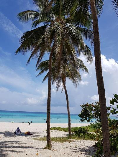 Beach Beachphotography Playa #beach Playa Sunlight Karibisches Meer Karibik Cocktail Türkises Wasser Tree Water Palm Tree Sea Beach Blue Sand Tropical Climate Sky Horizon Over Water Coconut Palm Tree Seascape Palm Leaf Coastline Island Coast Tropical Tree Ocean