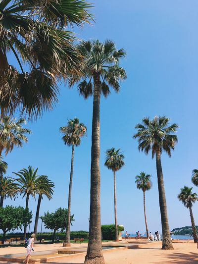Summertime 🌞 Palm Tree Tree Blue Tree Trunk Growth Day Clear Sky Nature Scenics Beauty In Nature Beach Outdoors Sky Summer Your Ticket To Europe Investing In Quality Of Life Relaxing France The Week On EyeEm