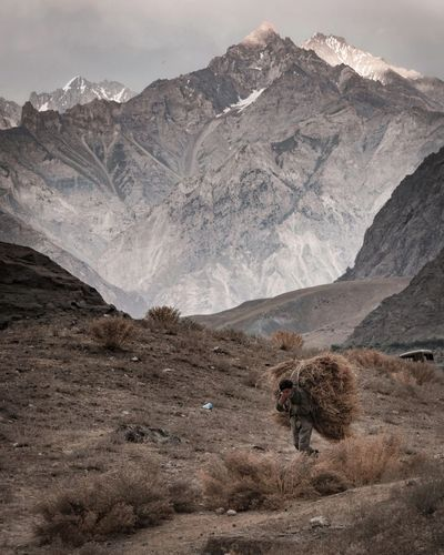 Man carrying hay against mountains during winter