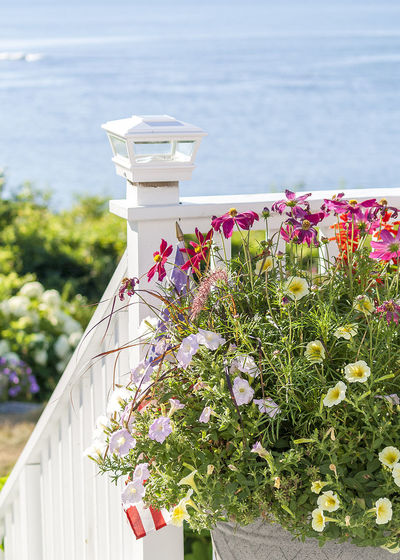 Close-up of flowers blooming on retaining wall by sea against sky