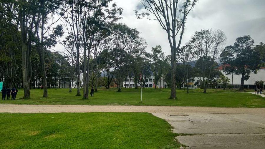 UniversidadNacionaldeColombia Universidad Nacional De Colombia Arboles , Naturaleza Arboles Nature Arboles University University Campus Universidad