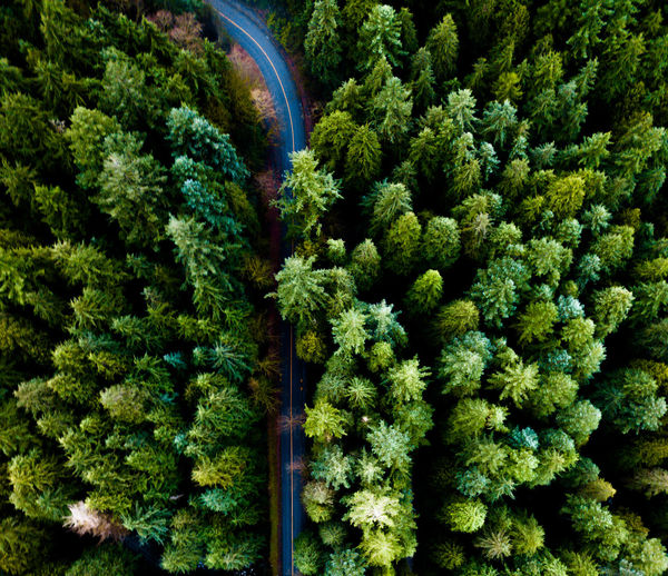 cut through Road Beauty In Nature Close-up Day Forest Freshness Green Color Growth Indoors  Nature No People Plant Tree