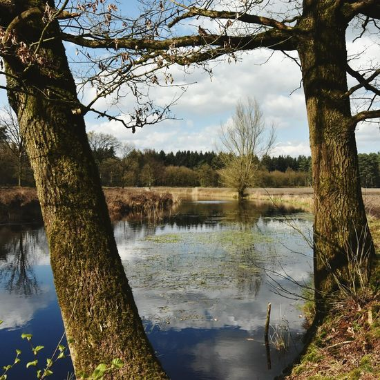 Trees Stiphoutse Bossen Stiphout Helmond Geology Glacial Melt Remnant Channel Water Reflections Pond Trees And Water Nature Spring