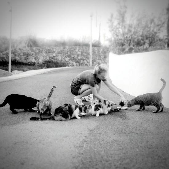 Feeding  Homeless Cats Homeless Animals Portugal