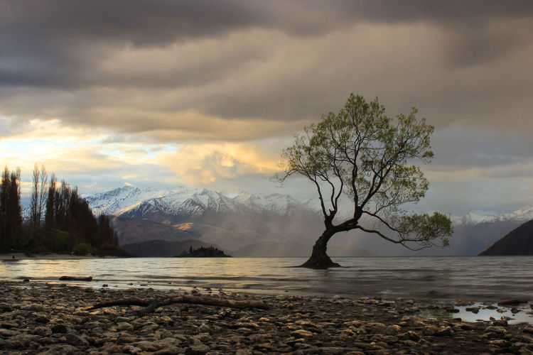 Stormy sunset at the famous 'Lonely Tree' in Wanaka Lake View Nature New Zealand Photography Raining Storm Cloud Sunset Travelling Wanaka Tree Lonely Tree Wanakalake Wanaka