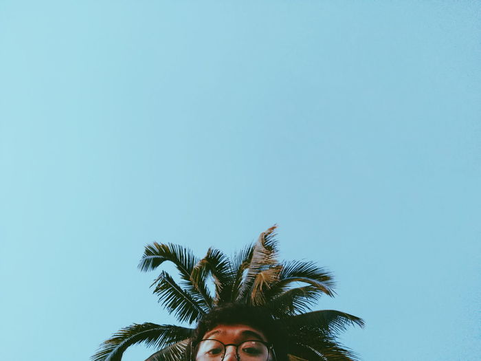Cropped Image Of Man And Palm Tree Against Clear Blue Sky