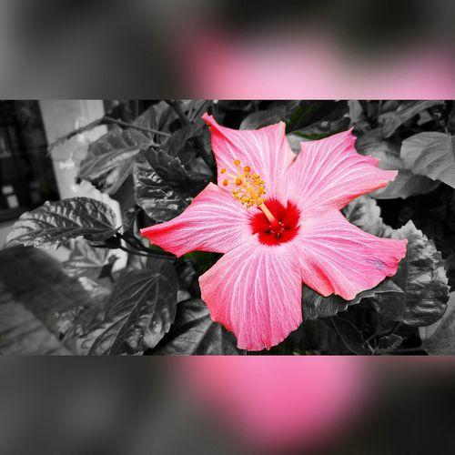 Flowers Blackandwhite Onecolorphoto
