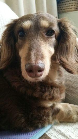 Dog Dog Love 愛犬 カメラで撮りまくっていたらさすがに目覚めました
