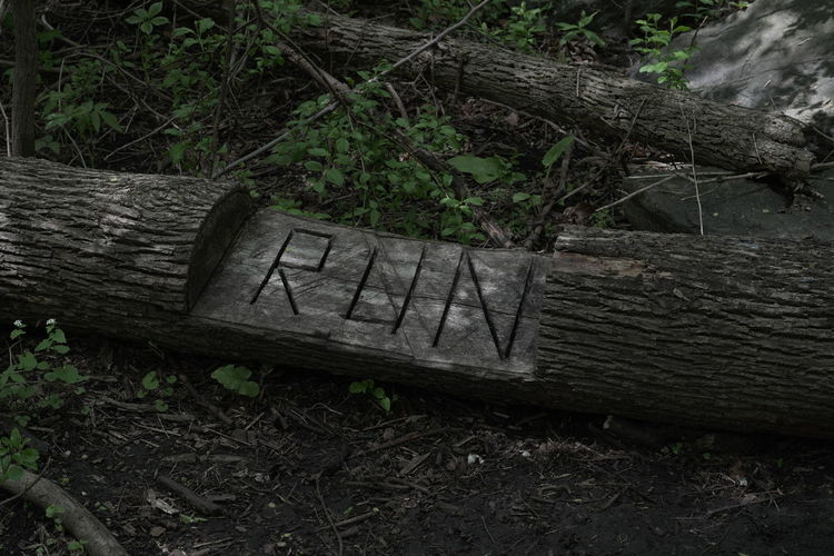 Abandoned bench in forest