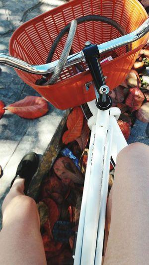 Paseo por las bellas calles de Tulum, Q. Roo. Tulum Vacations Beautiful Steeet Bike Ride Rivera Maya