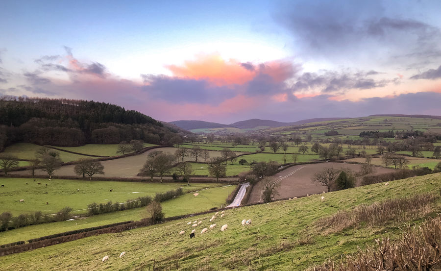 Winter morning sky over the Clun Valley, Shropshire, UK Environment Sky Landscape Scenics - Nature Beauty In Nature Tranquil Scene Plant Tranquility Cloud - Sky Field Grass Land Nature Non-urban Scene Sunset No People Tree Green Color Mountain Idyllic Outdoors Rolling Landscape