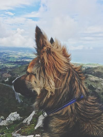 Close-Up Of Dog On Mountain Against Sky