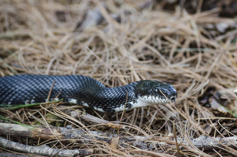 Close-up side view of a snake on ground