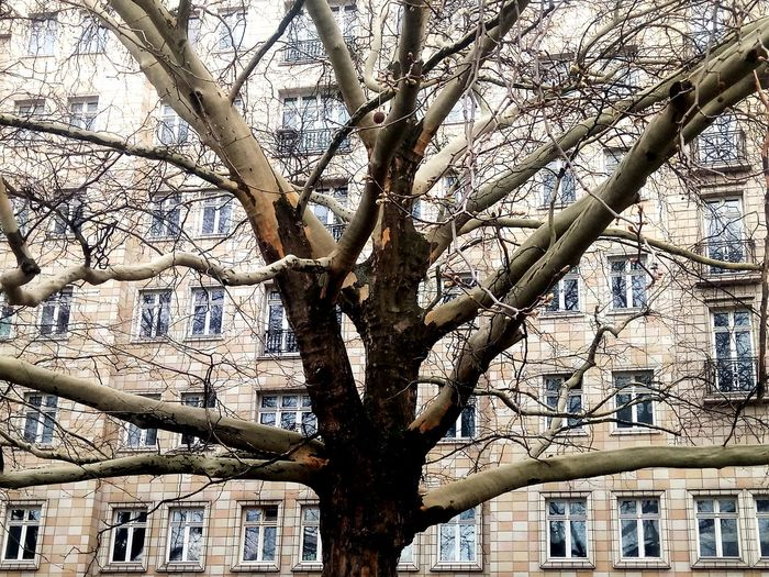 House Building Berlin Karl-Marx-Allee Strausberger Platz Structure Contrast Nature Building Nature Tree Branch Tree Trunk Backgrounds Full Frame Sky Close-up
