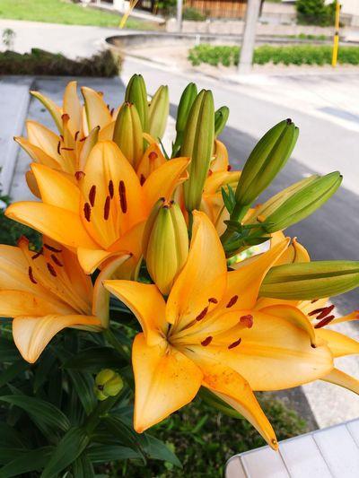 Luly Flower