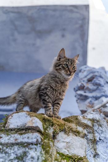 Portrait of cat on rock
