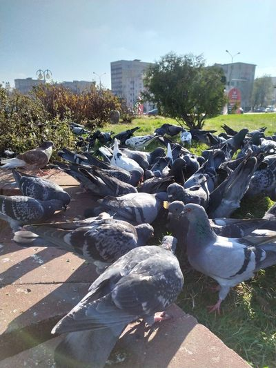 View of pigeons in city