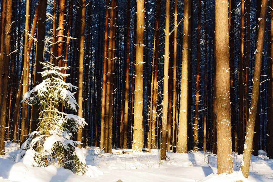 Snow Winter Cold Temperature Nature No People Outdoors Day Beauty In Nature Tree