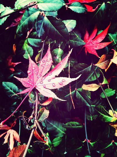 Walking Around Autumn Rainy Days Leaves