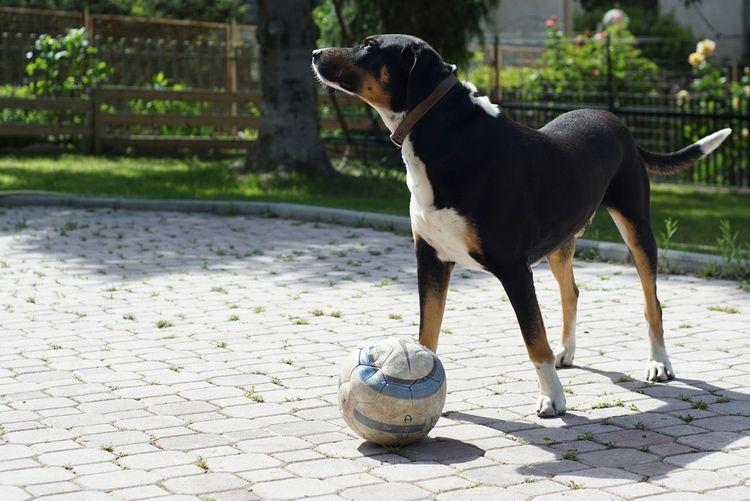 My dog playing