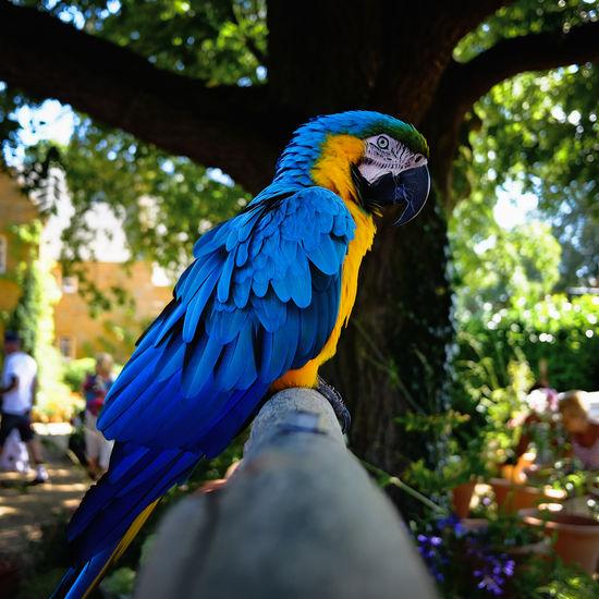 Blue bird perching on a tree