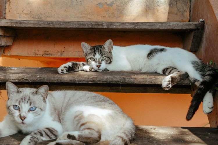 Praia das Caravelas Cat Pets Domestic Mammal Feline Domestic Animals Domestic Cat Vertebrate Looking At Camera Portrait Group Of Animals Relaxation No People Two Animals Day Resting Whisker Tabby