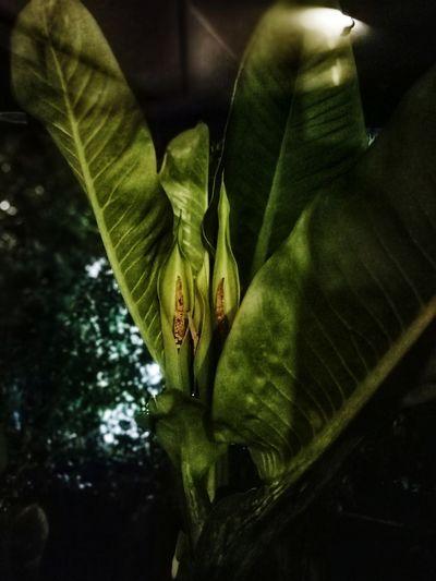 Leaf Close-up Green Color Plant
