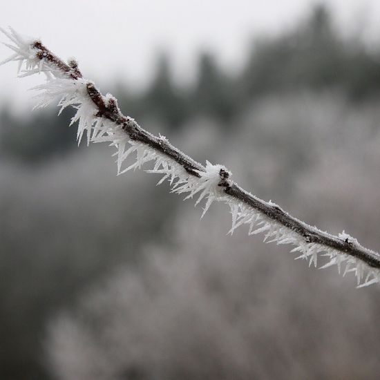 Nature Close-up Outdoors Cold Temperature Day Frosty Branch Winter Ice Beauty In Nature Canon Snow Snow Covered Belowzero