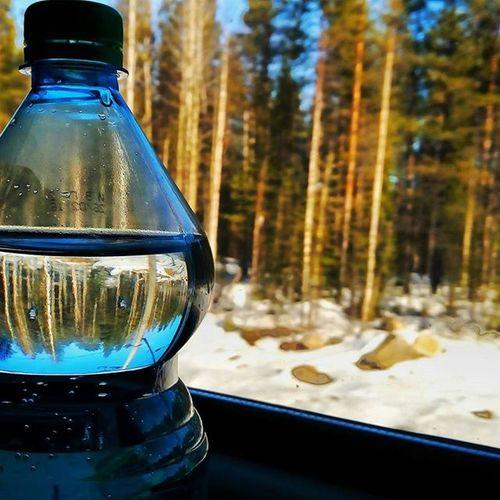 Instapic Instagood Instalike Instamood Instagram VSCO Vscocam Vscorussia Russia Russianature Nature Murmansk Beautiful Nice Like Love Forest Landscape Bottle Water Travel Train
