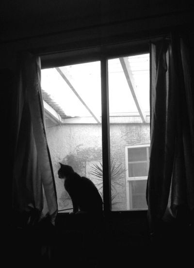 My cat Matisse. RIP. Cat Cat ♡ Cats Domestic Animals Looking Through The Window Looking Through Window My Cat My Cat! Pets Sitting Pretty Window Window Sill Window View