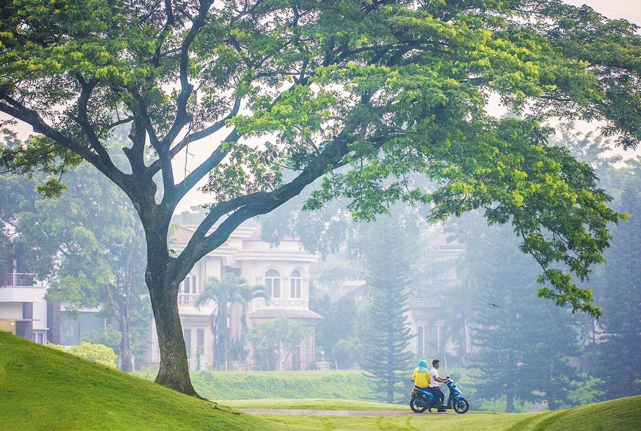 MAN RIDING MOTORCYCLE ON TREE BY PLANTS