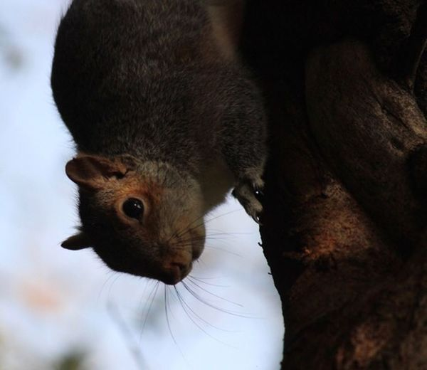 Animal Themes Animal Mammal Rodent One Animal Animal Wildlife Animals In The Wild Squirrel