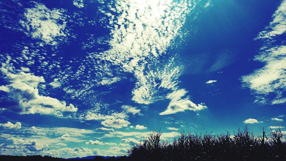 Like Fantasy Low Angle View Blue Nature Scenics Skyporn Sky And Clouds Backgrounds No People Growth Eye Em Nature Lover EyeEm Best Shots Eye4photography  Getting Inspired Eye Em Best Shots Exceptional Photographs EyeEm Nature Lover Naturaleza EyeEmBestPics Nature Grass Nature_collection Tranquility Landscape EyeEm Landscape Lost In The Landscape Connected By Travel Perspectives On Nature