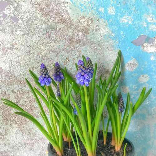 Spring spring Flower Growth Purple Nature Freshness Beauty In Nature Day Fragility Plant No People Green Color Petal Flower Head Leaf Outdoors Close-up Crocus