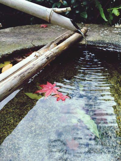 Autumn🍁🍁🍁 紅葉 Beautiful Art Japanese  Japan Photography Musium 侘寂 日本人でよかった 美しい 審美眼を鍛える 大山崎山荘美術館