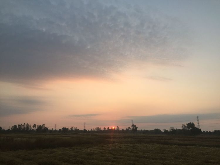 Beautiful Sunset, Sunlight, Sunrise and treescape in the morning. Sunset Field Landscape Sky Nature Beauty In Nature Scenics Tree No People Silhouette Tranquil Scene Tranquility Outdoors Cloud - Sky Rural Scene Grass Growth Architecture Day