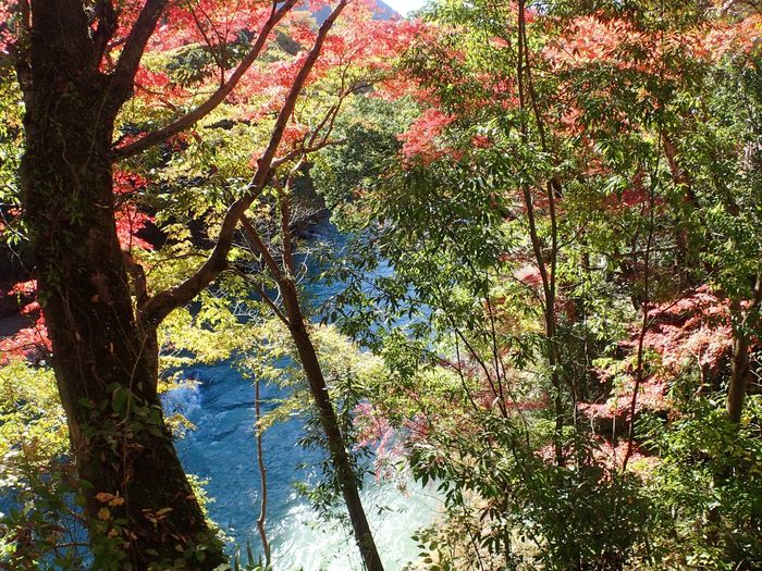 Nature Beauty In Nature Tree Forest River Autumn Colors Autumn Leaves Beauty Of Earth I Love Earth Mitake Tokyo Japan