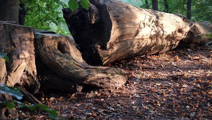 Fallen tree trunk in forest