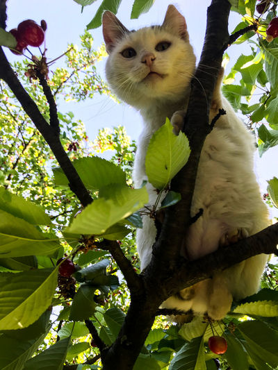 Cat sitting in a tree Animal Animal Themes Branch Cat Domestic Domestic Animals Domestic Cat Feline Growth Looking At Camera Low Angle View Mammal Nature No People One Animal Outdoors Pets Plant Portrait Tree Vertebrate Whisker