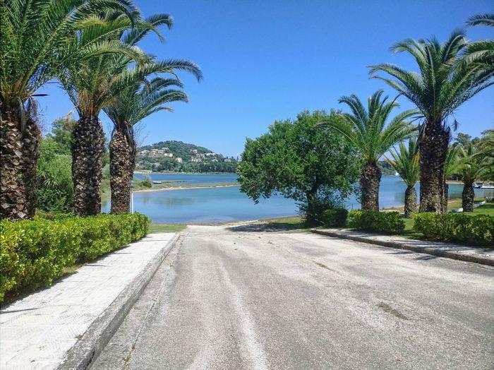 This is bliss GREECE ♥♥ Corfu Beach Palm Tree