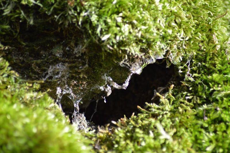A hole...