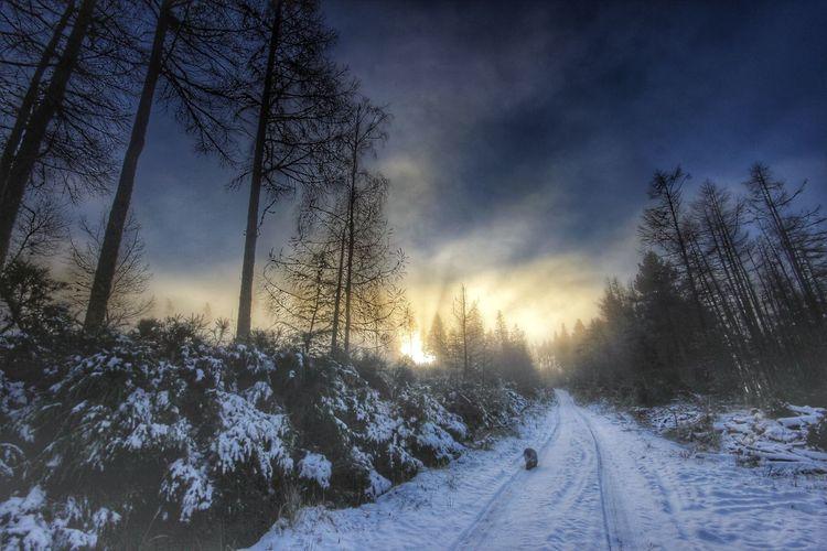 A beautiful misty winter morning Winter Wintersun Winter Wonderland Winter Trees Lowlightphotography Wideangle Lowwintersun Canon Canon60d Canonphotography Sigma Enjoying Life