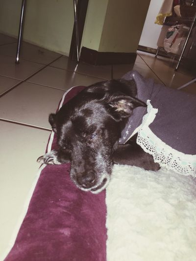My dog XICA she just turn 15y on her last days. Is going to be one of my saddest days in my life when her comes