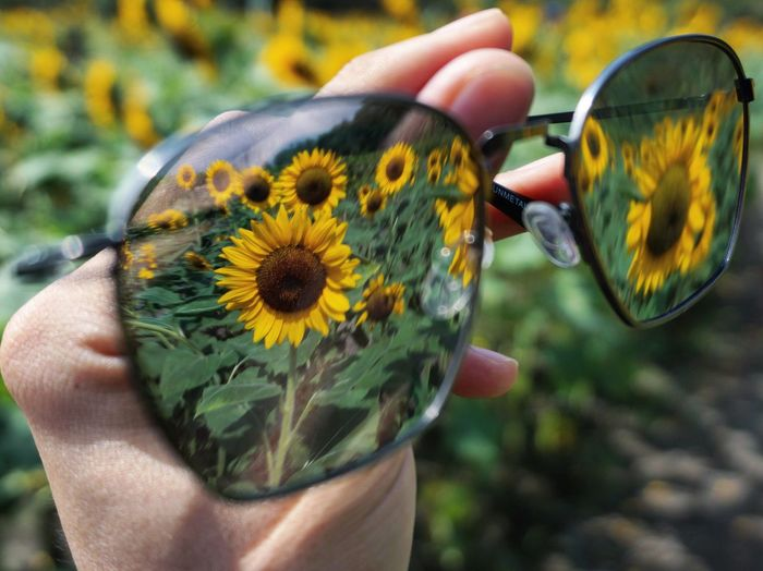 Close-up of hand holding sunglasses with reflection