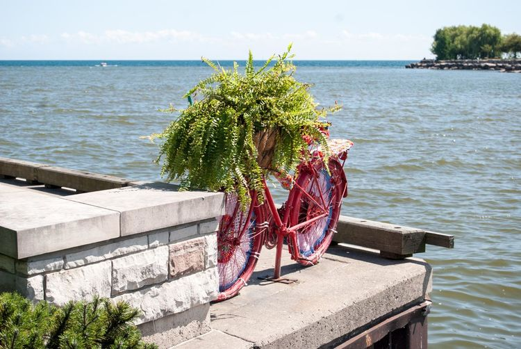 Plants growing on bicycle at waterfront