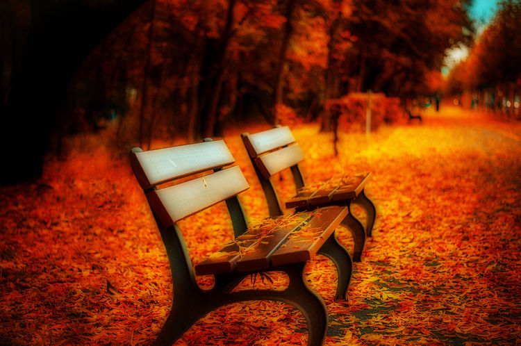 Fall benches shown in orton effect Autumn Beauty In Nature Beauty In Nature Benches Chair Day Fall Fall Colors Focus On Foreground Forest Idyllic Leaves Nature No People Orton Effect Outdoors Path Red Relaxation Tranquil Scene Tranquility