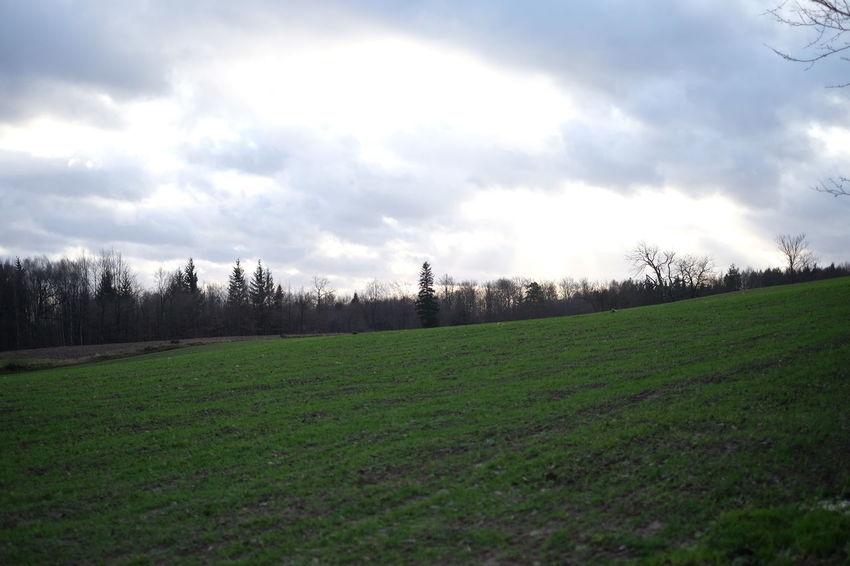 Field Grass Landscape Outdoors